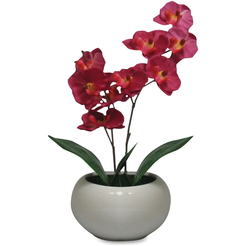 First Base First Base Elementals Moth Orchid Fuchsia Plant 27222 FST27222